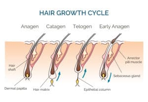 How Long Does It Take to Grow a Beard: The Process of Hair Growth